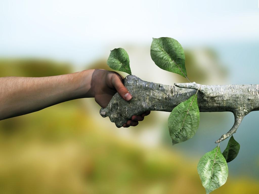 Entidades se reúnem para debater modelagem econômica para o reflorestamento no Brasil