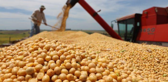 Soja representa quase 50% das exportações brasileiras do agronegócio em maio