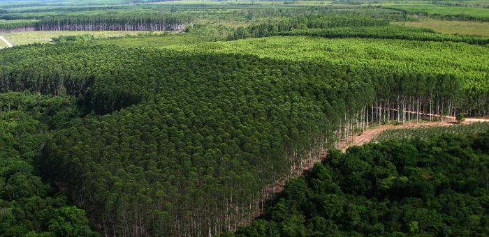 Código Florestal reduziu o passivo de APPs e Reservas Legais em 41 milhões de hectares de vegetação