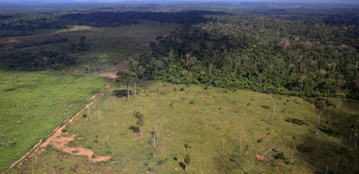 Desmatamento cai 28% em florestas protegidas da Amazônia