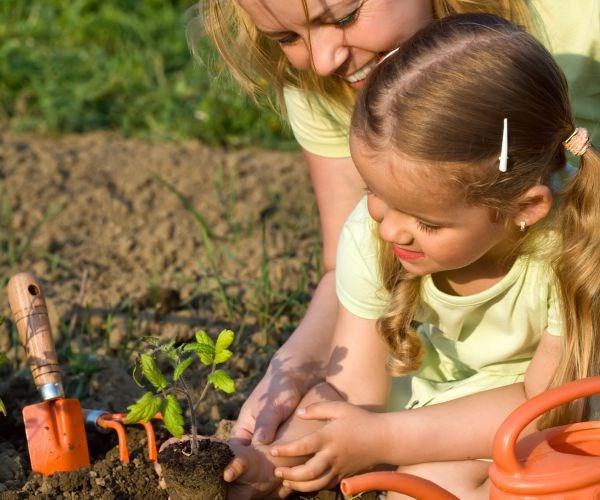 Teve um bebê? Então, plante uma árvore!