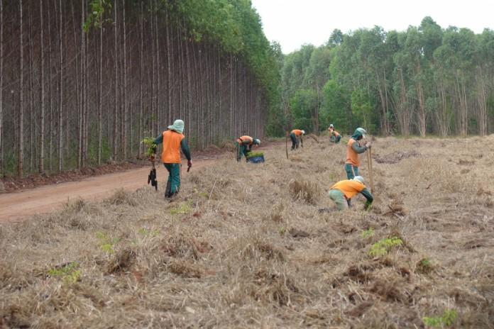 Brasil já é o 4º maior plantador de florestas