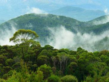 Governo do Mato Grosso e IDH celebram parceria para a conservação ambiental