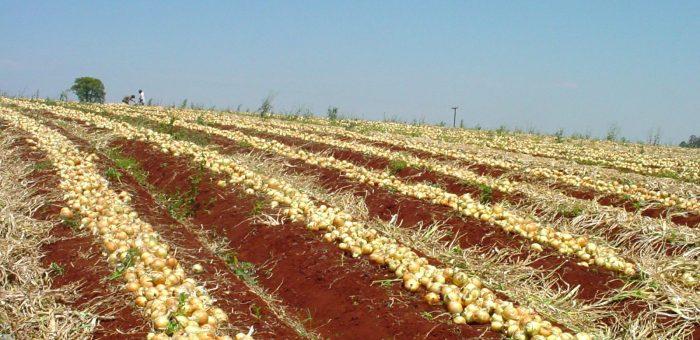 Potencial agro-ambiental do Brasil é ressaltado em painel na COP 23