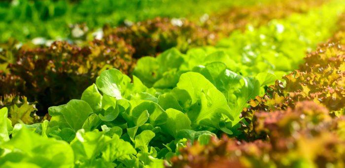 As 5 tendências da agricultura segundo a Bayer