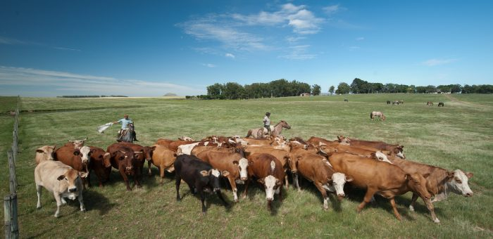 Pecuarista quer aumento no seguro para produzir carne e leite