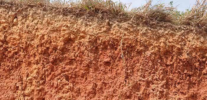 Brasil adicionou 22,8 milhões de toneladas de fósforo em seus solos nos últimos 50 anos